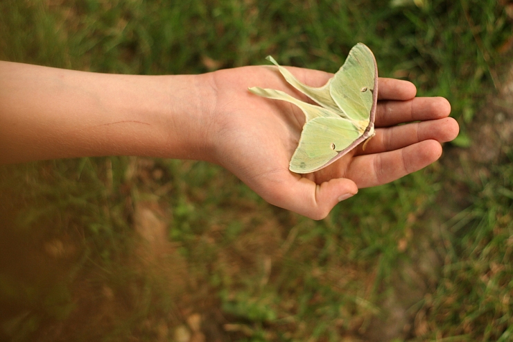 green-moth-2-1392587-1279x852